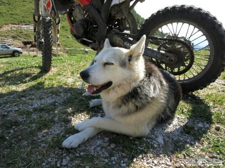 il cane della malga