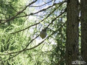 nido di calabroni