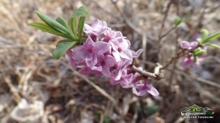 Monte Lupo fioriture