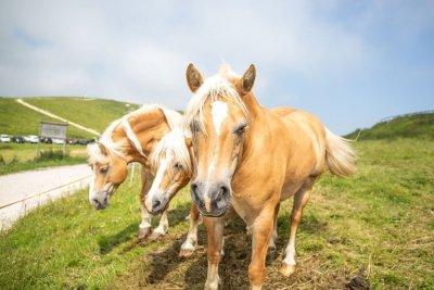 escursionisti-del-gusto-malga-cavalli