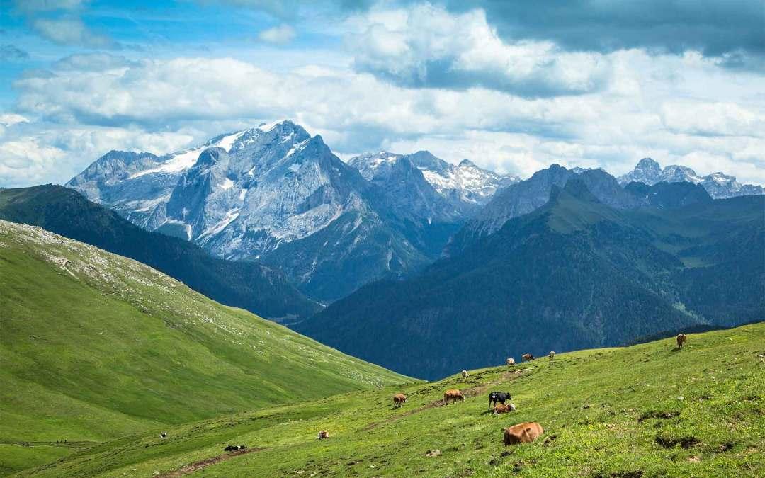 Formaggi di alpeggio: l'origine del gusto