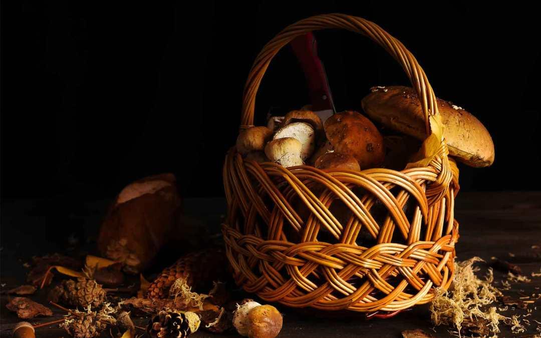 Montagna d'autunno nel piatto: come abbinare funghi e formaggio d'alpeggio