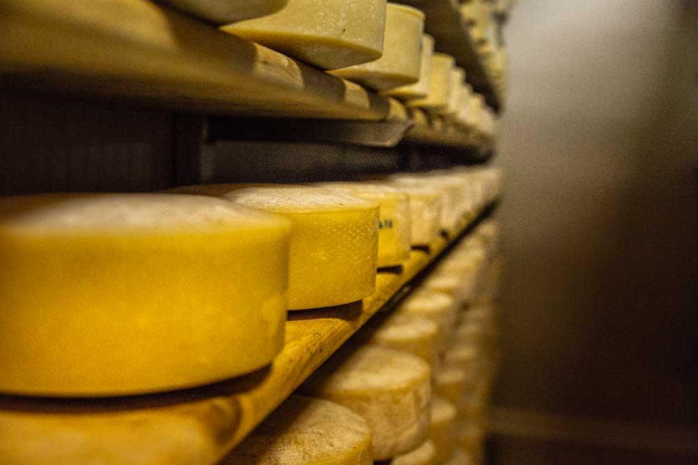 La montagna nel cuore: la nostra prima produzione di formaggi