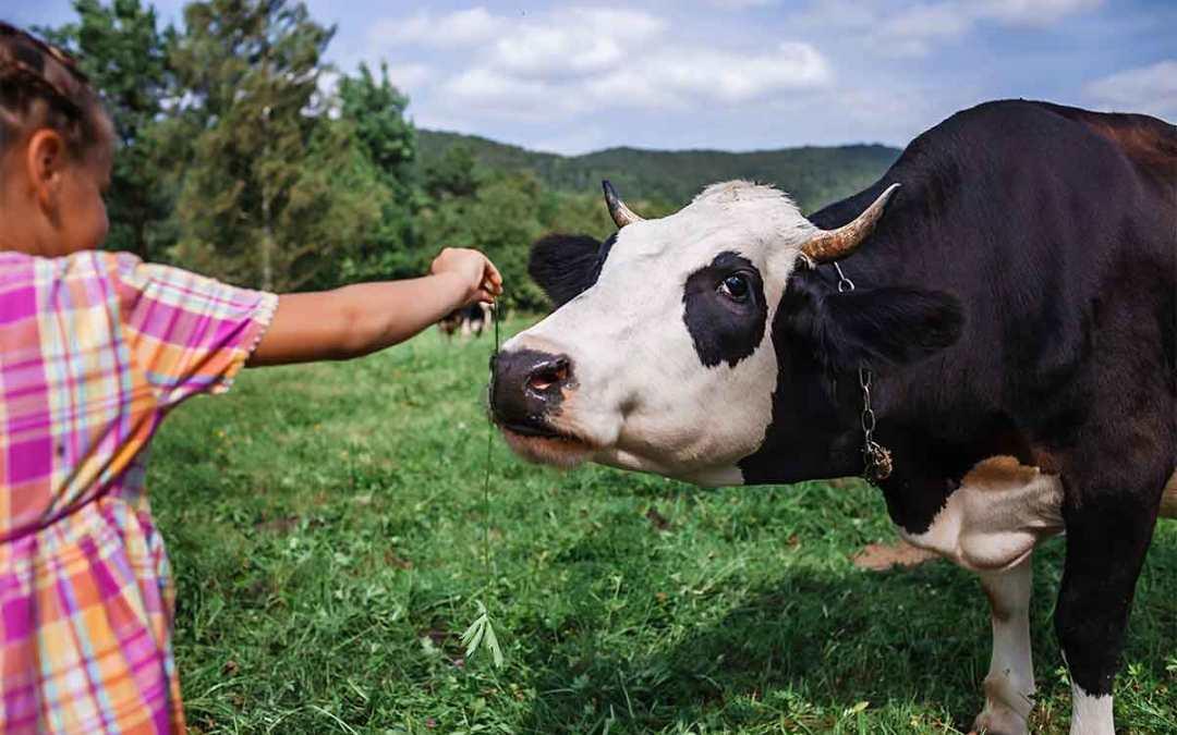 Stella Alpina: la caciottina a latte crudo di alpeggio