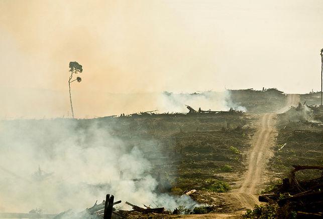 consecuencias del cultivo de palma aceitera