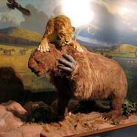 Los 10 animales prehistóricos y extintos que podría resucitar