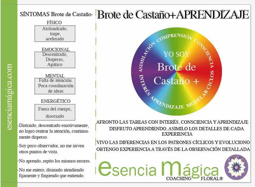 BROTE DE CASTANO BACH APRENDIZAJE