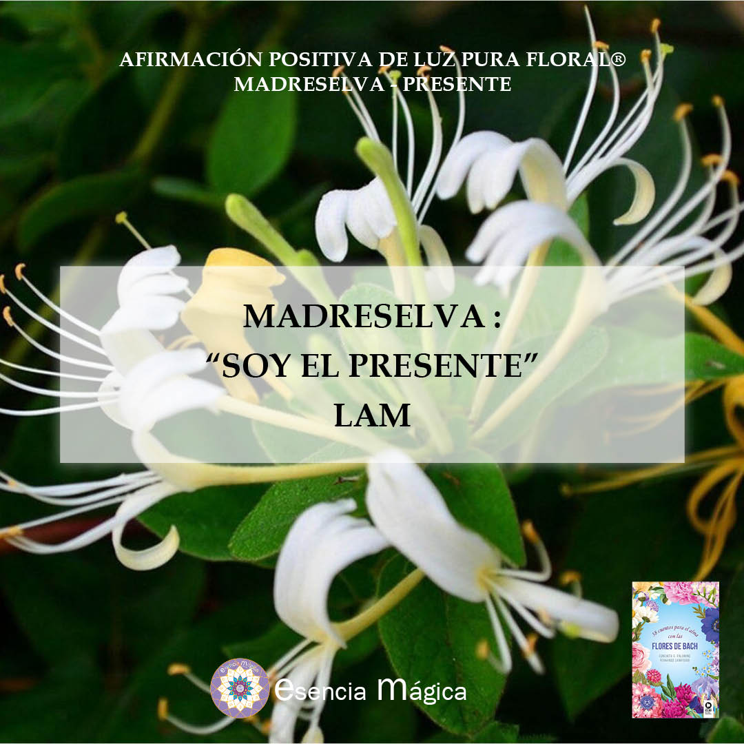 Afirmación positiva de Luz Pura Floral. Madreselva-Presente