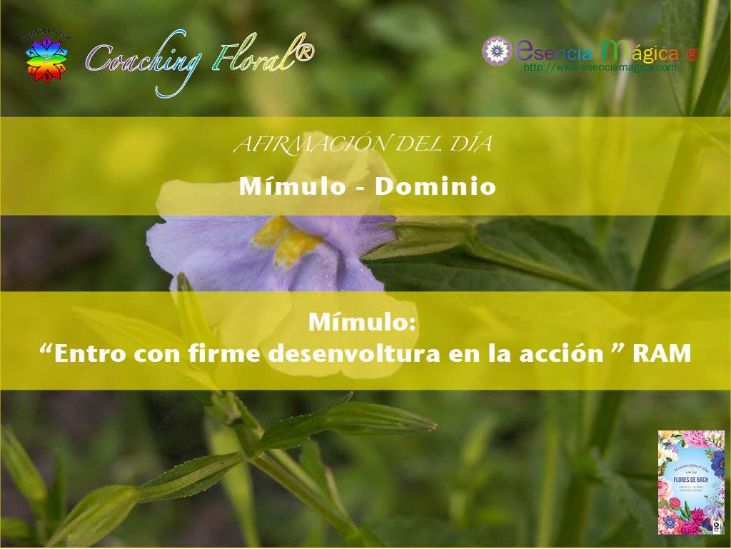 Afirmación positiva de Luz Pura Floral. Mímulo-Dominio