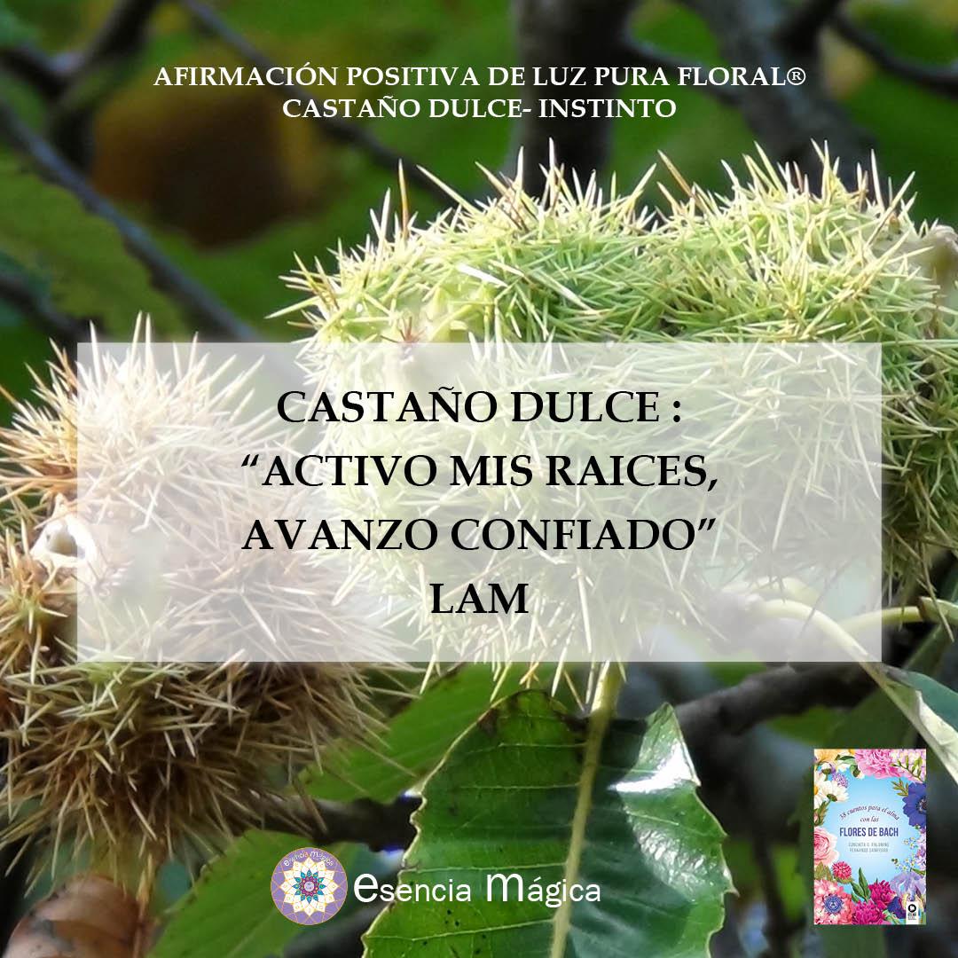 Afirmación positiva de Luz Pura Floral. Castaño Dulce-Instinto