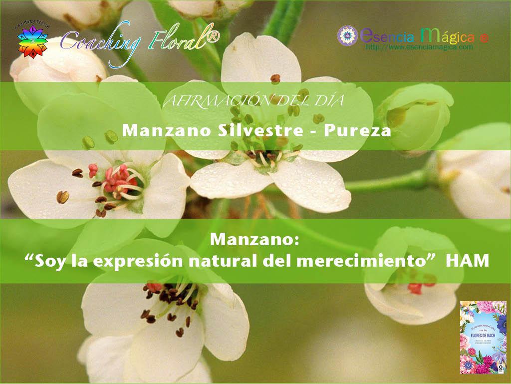 Afirmación positiva de Luz Pura Floral. Manzano-Pureza