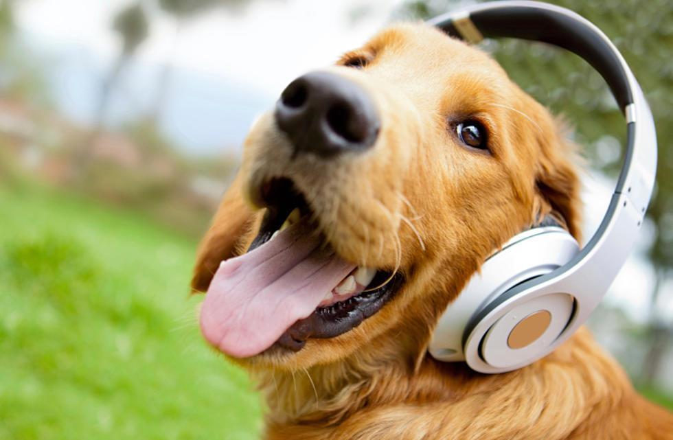 7 estudos científicos sobre como os animais reagem à música.