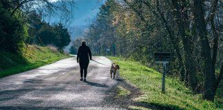 Una señora camina con su perro bajo los árboles. andar mejora la salud