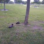 Ducks sitting under the tree at the park