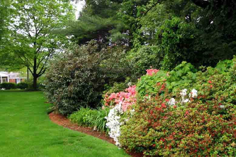 Flowering Shrubs in Lancaster, PA Eshelman Mill Gardens and Landscapes