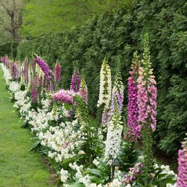 What to Know About Perennial Gardens in Lancaster