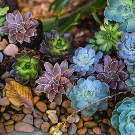 Xeriscaping the Right Way: No Rock Beds In Sight