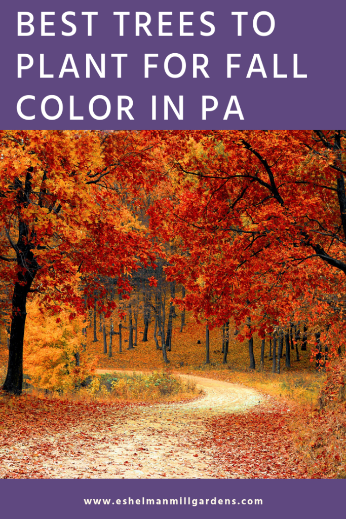 Best Trees to Plant in PA for Fall Color