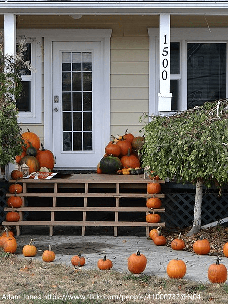 Pumpkins as fall and Halloween decorations