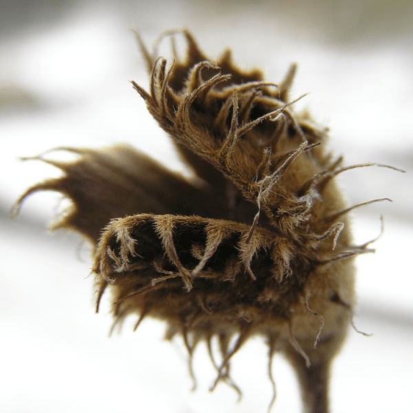 Fall Chores Seed Heads