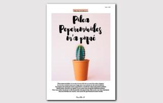 Magazine N°1 - jardinage sur balcon - changer du pilea