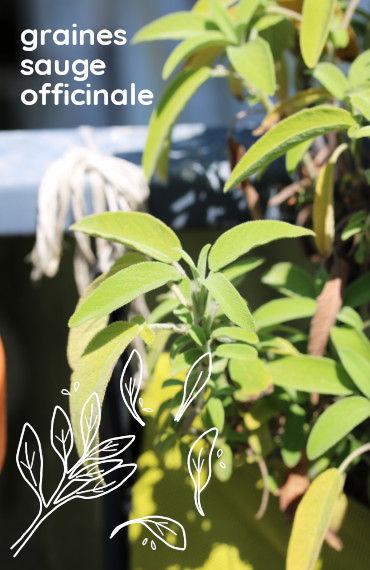 box jardinage bio été : sachet de graines bio et reproducible de sauge officinale