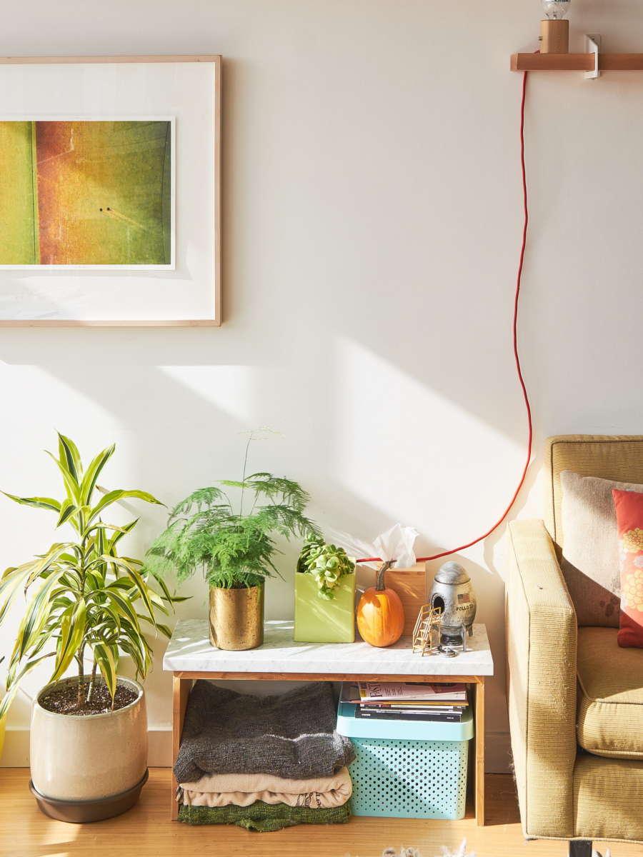 jungle urbain et plantes dans le salon ensoleillé. Échoppe Végétale
