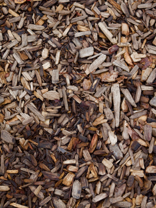 paillis avec des copeaux de bois secs pour retenir l'humidité après l'arrosage au potager en été