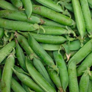 sachet de graines bio et reproductibles de pois nain de kelvedon - échoppe végétale
