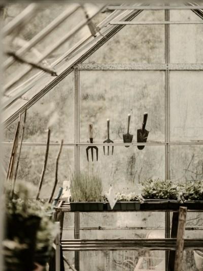 au potager en septembre semis plantation et culture de. Black Bedroom Furniture Sets. Home Design Ideas