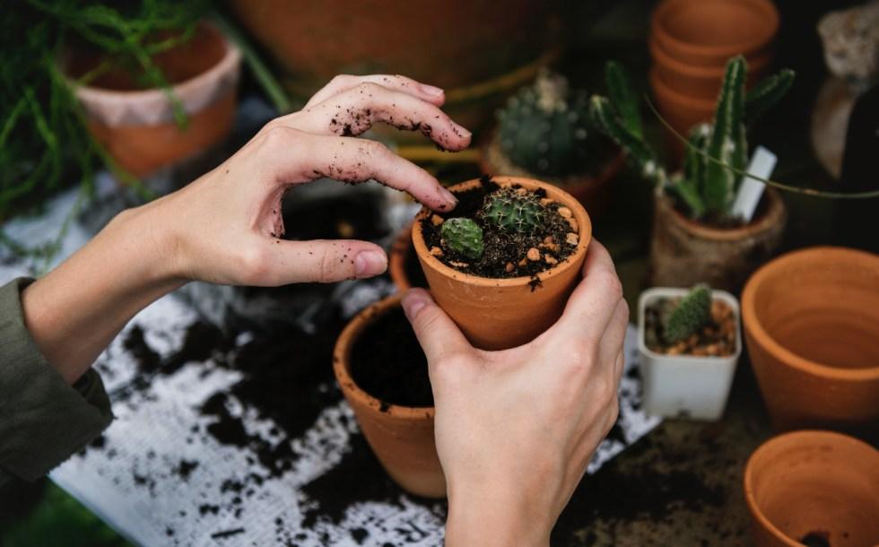 atelier jardinage en entreprise