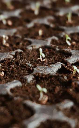 quelles graines semer en novembre au potager de balcon
