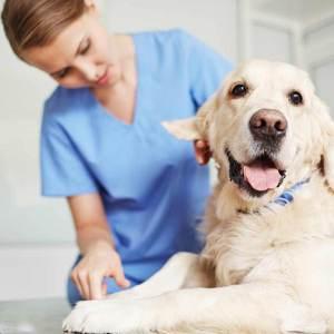 Dezinfekcia pre veterinárov a domácich miláčikov