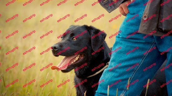 Dog Training Become A Professional Dog Trainer