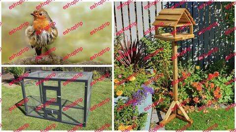 Bumper bird pack Bird Table Small aviary British Birds