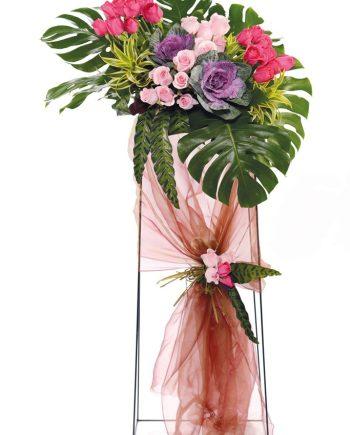 brassicas roses