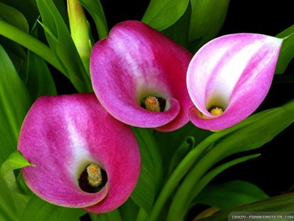 Image result for beautiful lily