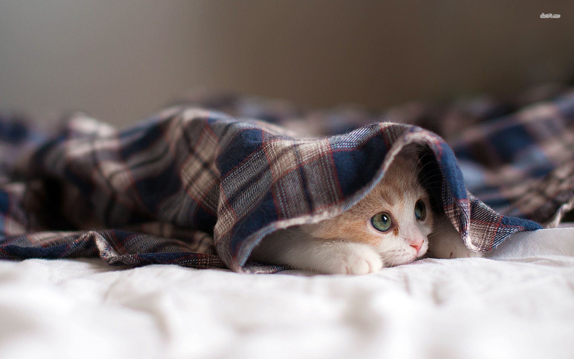 Image result for cat hiding under blankets