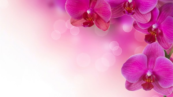 Flower wallpaper | 1920x1080 | #38116