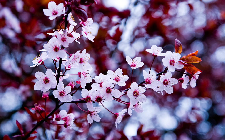 Tumblr Flower Laptop Wallpapers