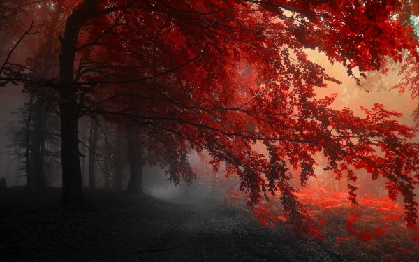 Red Forest wallpaper | 2880x1800 | #31559