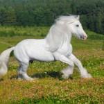 White Horse Wallpaper 1157x768 84594