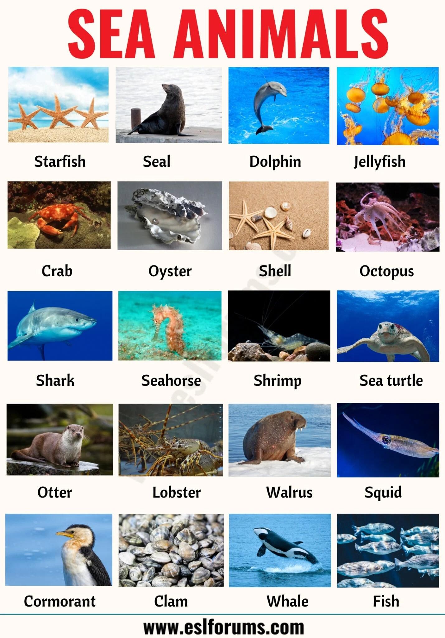 Sea Animals List Of 20 Interesting Sea Ocean Animals
