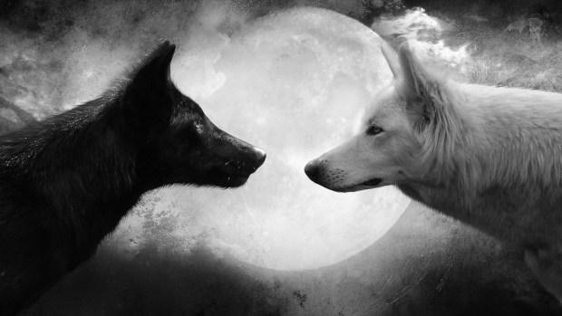 lobos_luna
