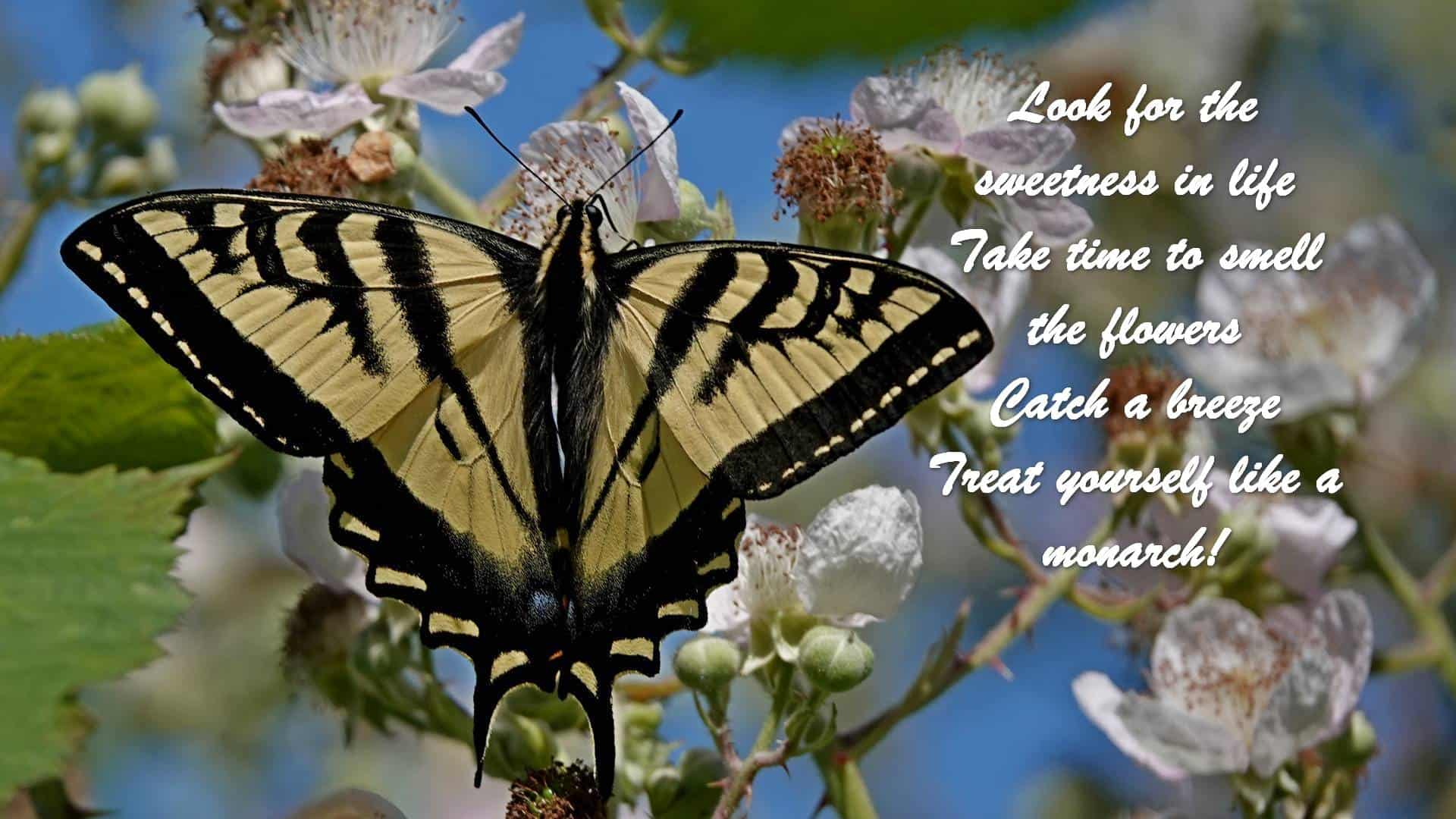 Look for the sweetness in life Take time to smell the flowers Catch a breeze Treat yourself like a monarch!