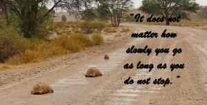 """""""It does not matter how slowly you go as long as you do not stop."""""""