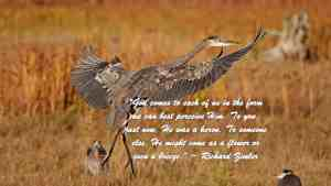 Heron God comes to each of us