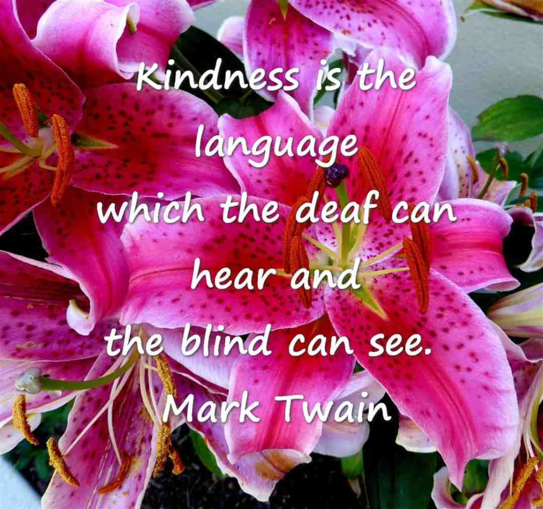 #SeniorSalon  Kindness is the language which the deaf can hear and the blind can see.  Mark Twain