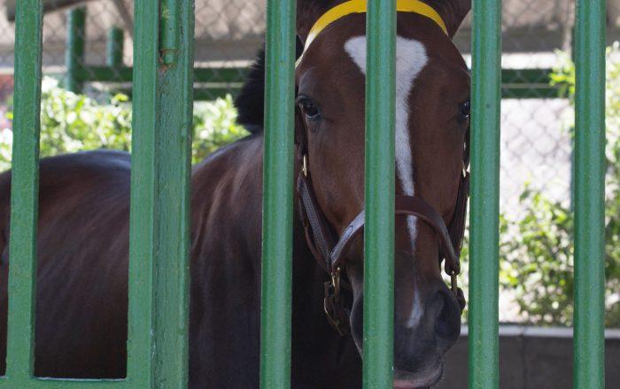 Roban caballo en Arroyo
