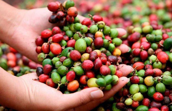 Jefes de agencias se unen al Departamento de Agricultura por el café